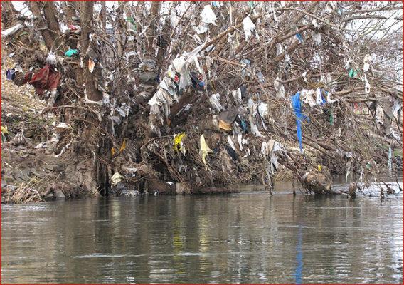 boom vol plastic afval langs de Maas